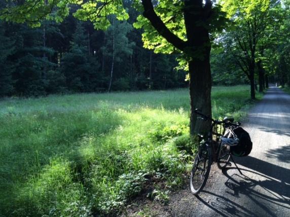Ich bin gern im Wald unterwegs... per Pedes und mit dem Rad.