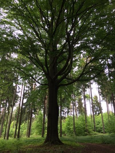 Ein markanter Lieblingsbaum... er hat viel zu erzählen... ich kenne die Geschichten seiner Inschriften nicht, aber zu jeder Jahreszeit beeindruckt er mich auf seine besondere Weise.