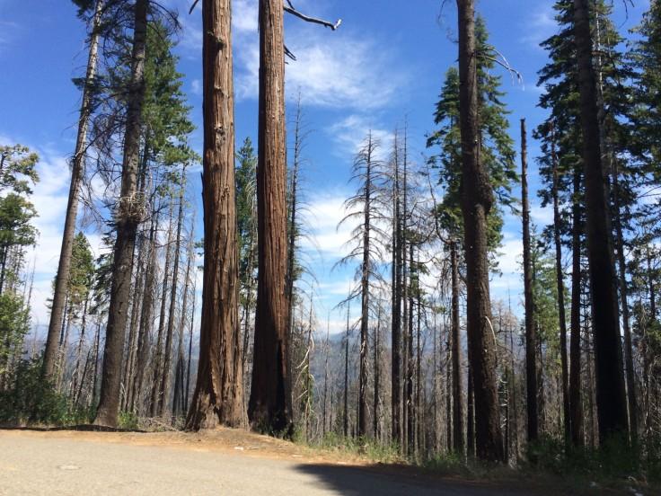 Kalifornien Feuer